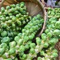 Брюссельская капуста – новый тренд в отечественном овощеводстве