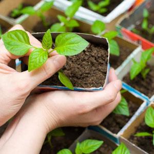 Январская рассада – список растений, которые можно начинать сажать уже сейчас