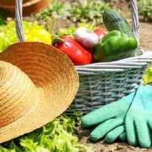 Органическое земледелие или как жить в гармонии с природой