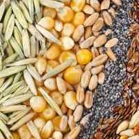 5 принципов выбора семян на новый сезон