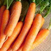 Хуже горькой редьки: почему морковь вырастает невкусной