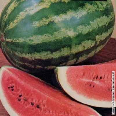 Семена арбуза Продюсер (весовые)