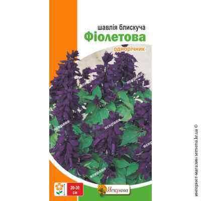 Семена шалфея блестящего Фиолетовый 0.2 г.