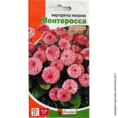 Семена маргаритки махровой Монтеросса 0.1 г.