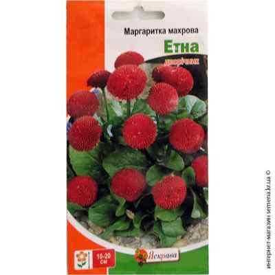 Семена маргаритки махровой Этна 0.1 г.
