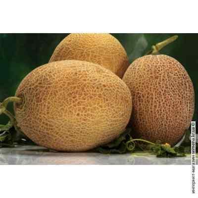 Семена дыни Амал (весовые)