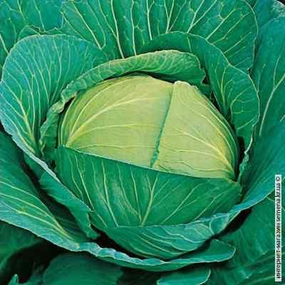 Семена капусты Амагер (весовые)