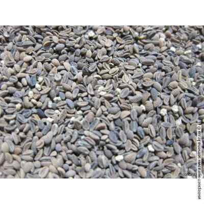 Весовые семена фацелии 40 кг