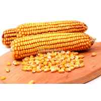 Семена кукурузы Харьковская 295 МВ 0.8 кг