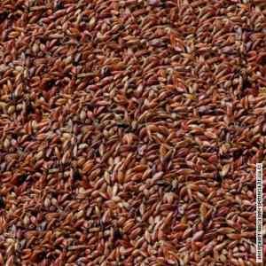 Семена суданки рябой