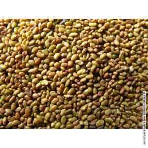 Семена люцерны (25/50 кг)