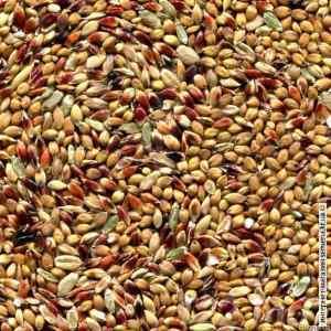 Семена суданки белой (40кг)