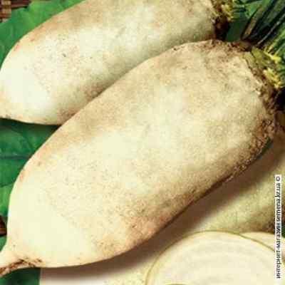 Семена свеклы кормовой Центаур (Украина)
