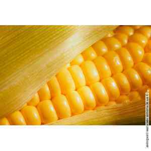 Семена кукурузы Кадр (25 кг)