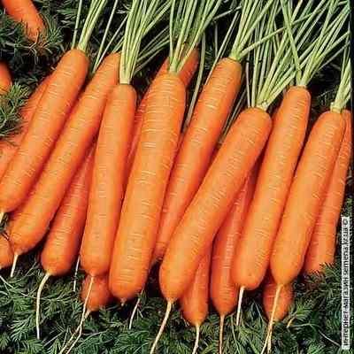 Семена моркви Нантская (весовые)