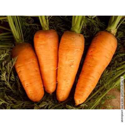 Семена моркви Московская зимняя (весовые)