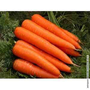 Морковь Лосиноостровская (весовая)