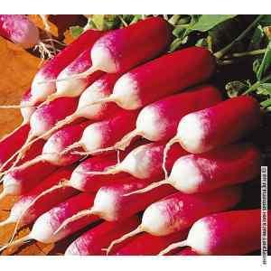 Семена редиса 18 дней (весовой) (25кг/меш)