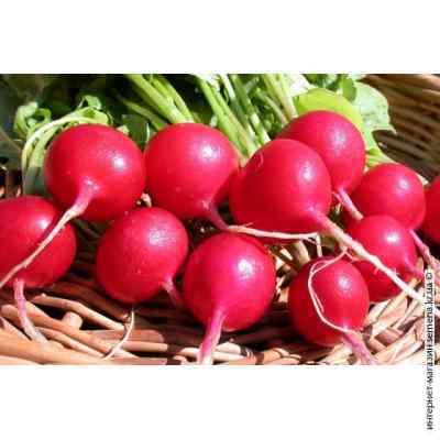Семена редиса Ранний красный (весовой)