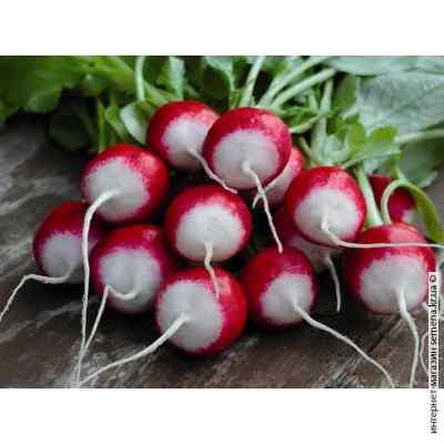 Семена редиса КБК (весовой) (25 кг/меш)