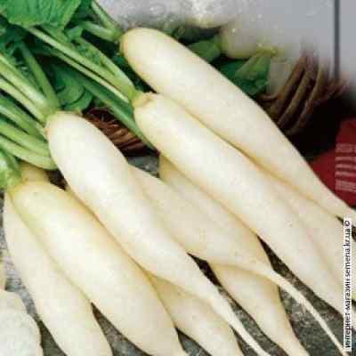 Семена редиса Ледяная сосулька (весовой)