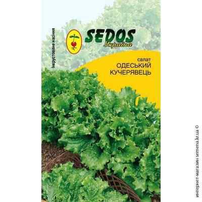 Инкрустированные семена салата Одесский кучерявец