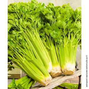Семена сельдерея черешкового Паскаль 0.5 г. Кращий Урожай