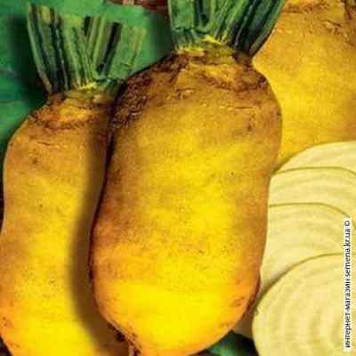 Семена свеклы кормовой Урсус (желтый) (25кг/меш)