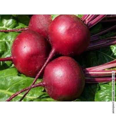 Семена свеклы столовой Темно-красная круглая (весовая) (20кг/меш)