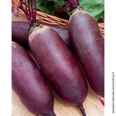 Семена свеклы столовой Риваль (весовая) (20кг/меш)