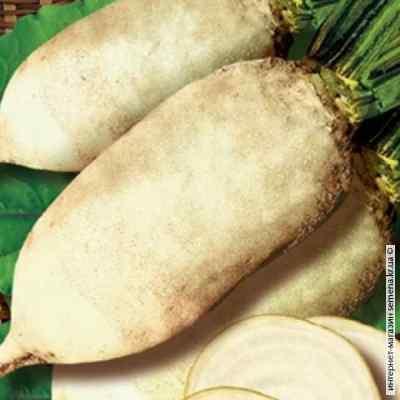 Семена свеклы кормовой Центаур (белый) (25кг/меш)
