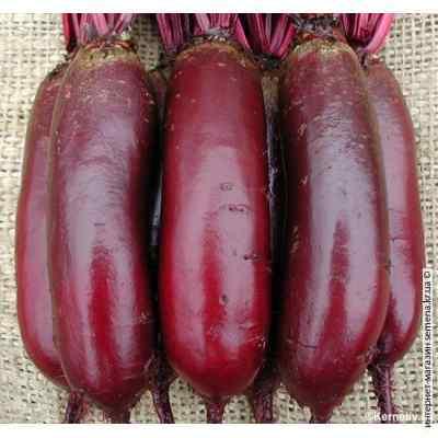 Семена свеклы столовой Опольская (весовая) (20кг/меш)