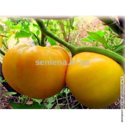 Семена томатов Лимонный гигант 0,5 г.