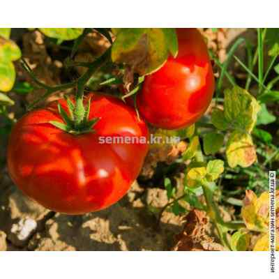 Семена томатов Медвежья лапа 0,1 г.