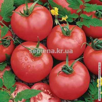 Семена томатов Малиновый звон 0,1 г.