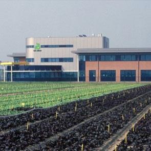 Компания из Голландии Райк Цваан (Rijk Zwaan)