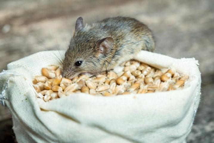 брикеты от крыс и мышей