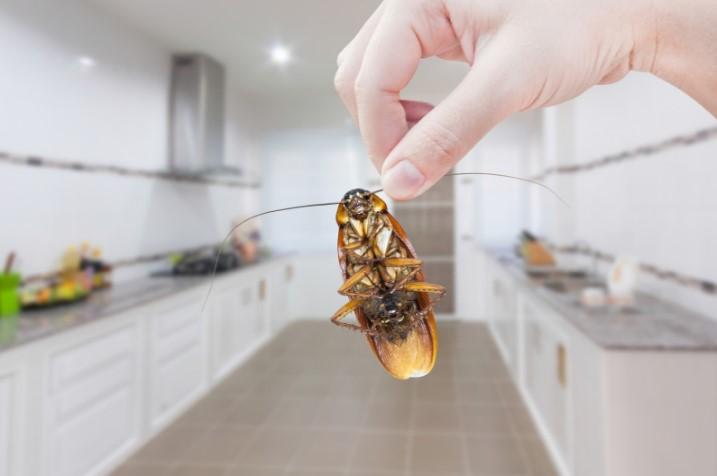 гель против тараканов