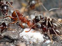средства от муравьев цена