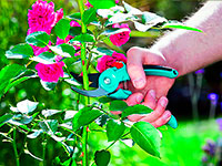 удобрения для роз купить