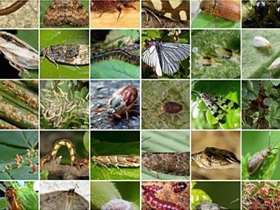 инсектициды в украине
