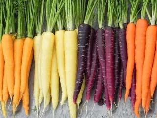 купить семена моркови оптом в Украине